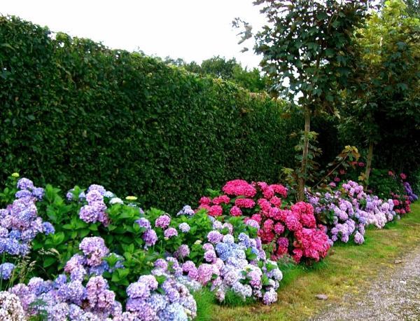 jardim da terra como cultivar hort nsias. Black Bedroom Furniture Sets. Home Design Ideas